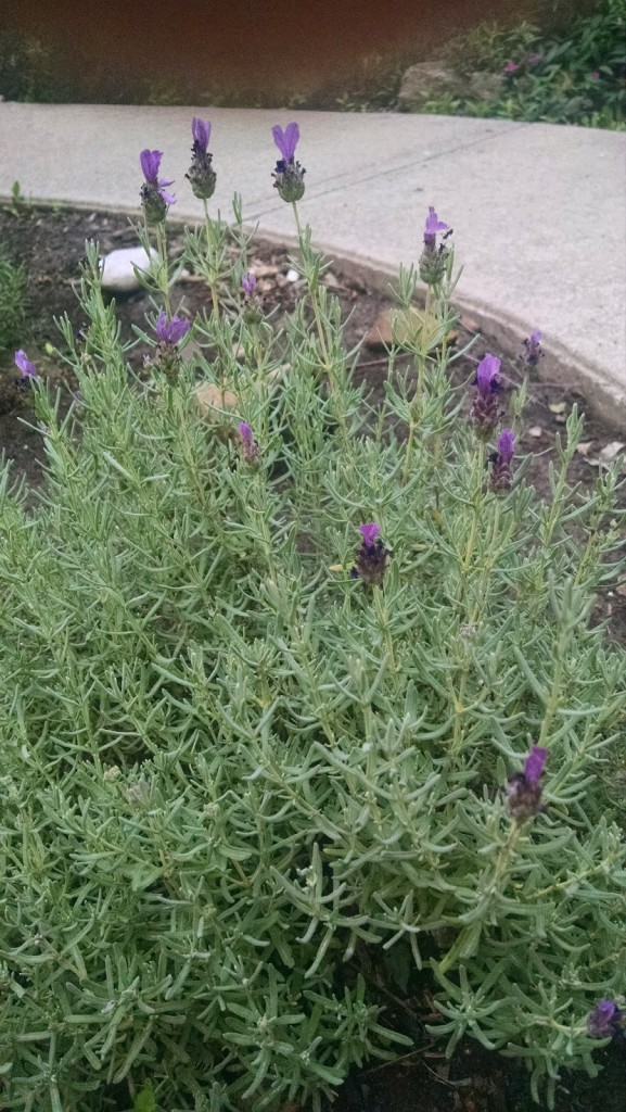 Our WELCOME Mat Garden